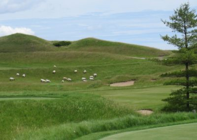 2017KI Whistling Straits Irish Course Hole 16 Sheep